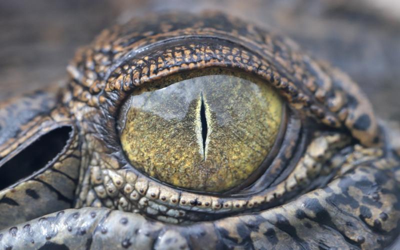 , Be Croc Wise In The Kimberley, Kimberley Croc Motel